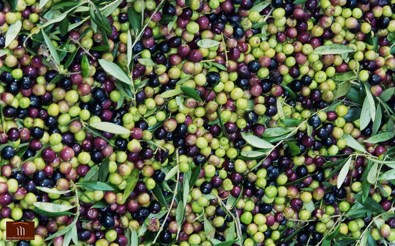 Olives01