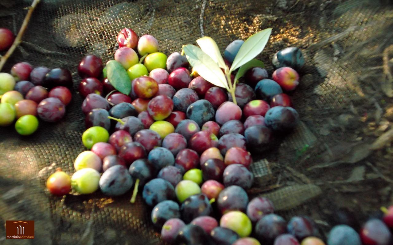 Olives29